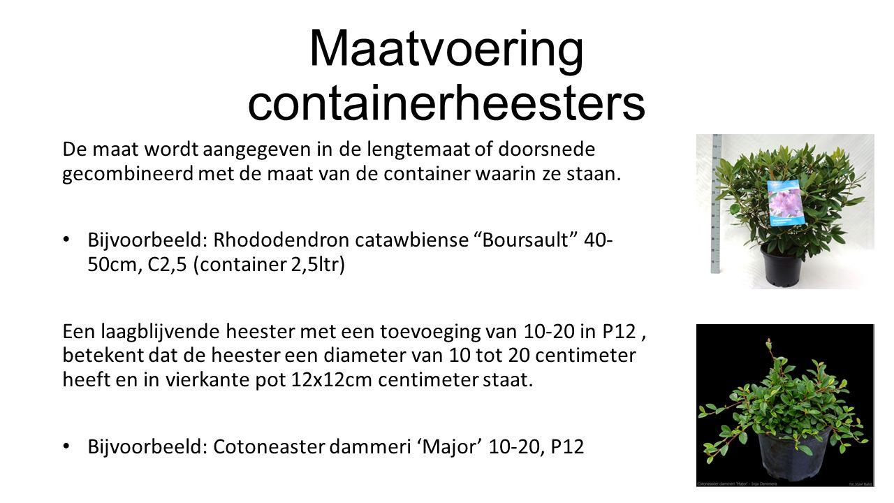 Maatvoering containerheesters