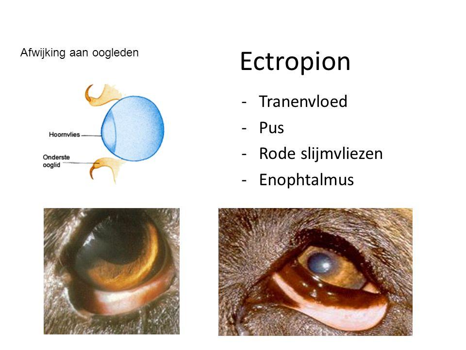 Ectropion Tranenvloed Pus Rode slijmvliezen Enophtalmus