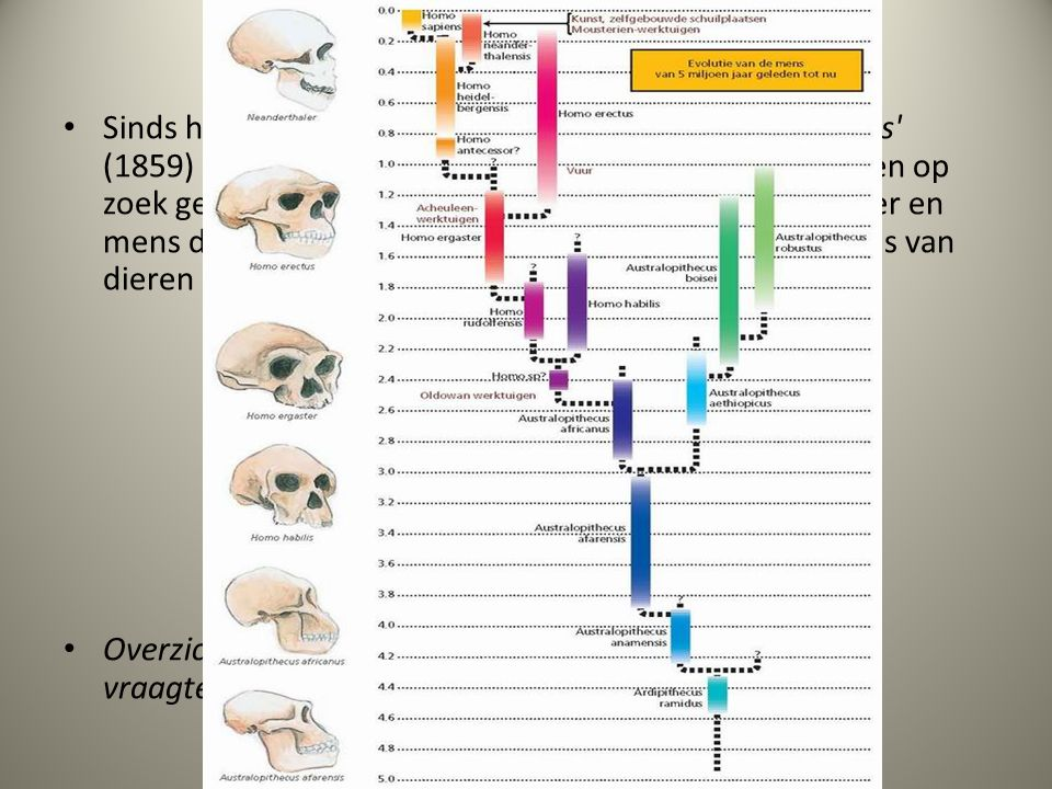 43.8. Evolutie van de mens