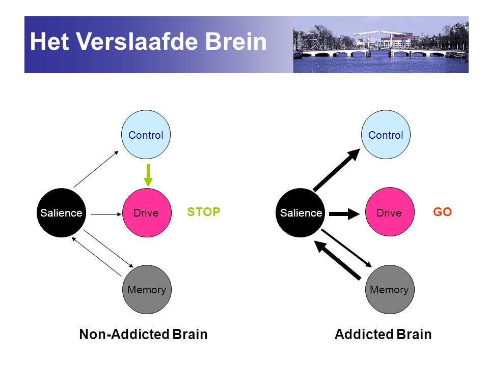 Het Verslaafde Brein Non-Addicted Brain Addicted Brain STOP GO Control