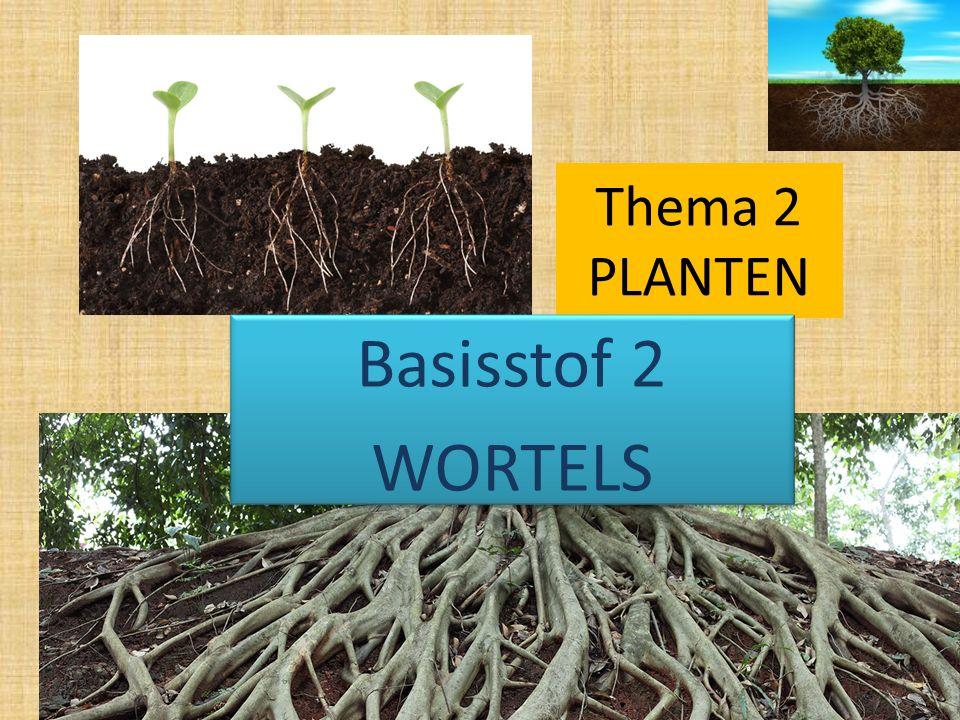 Thema 2 PLANTEN Basisstof 2 WORTELS