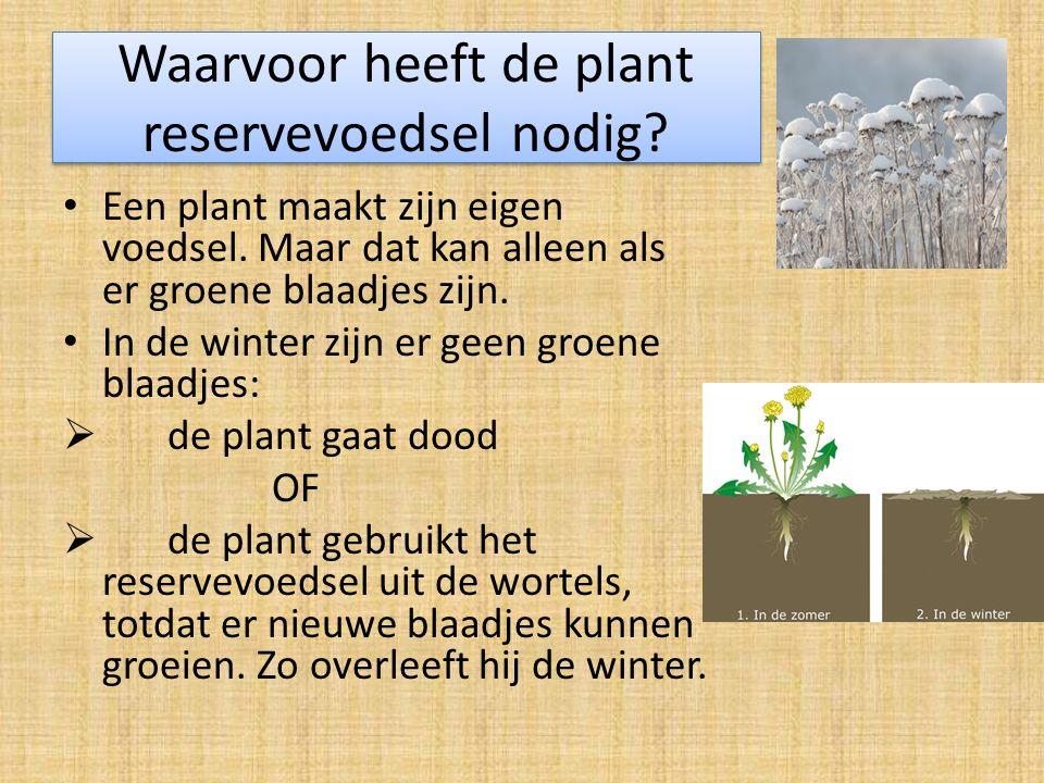 Waarvoor heeft de plant reservevoedsel nodig