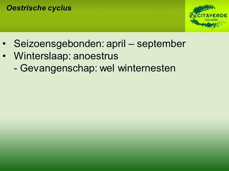 Seizoensgebonden: april – september Winterslaap: anoestrus