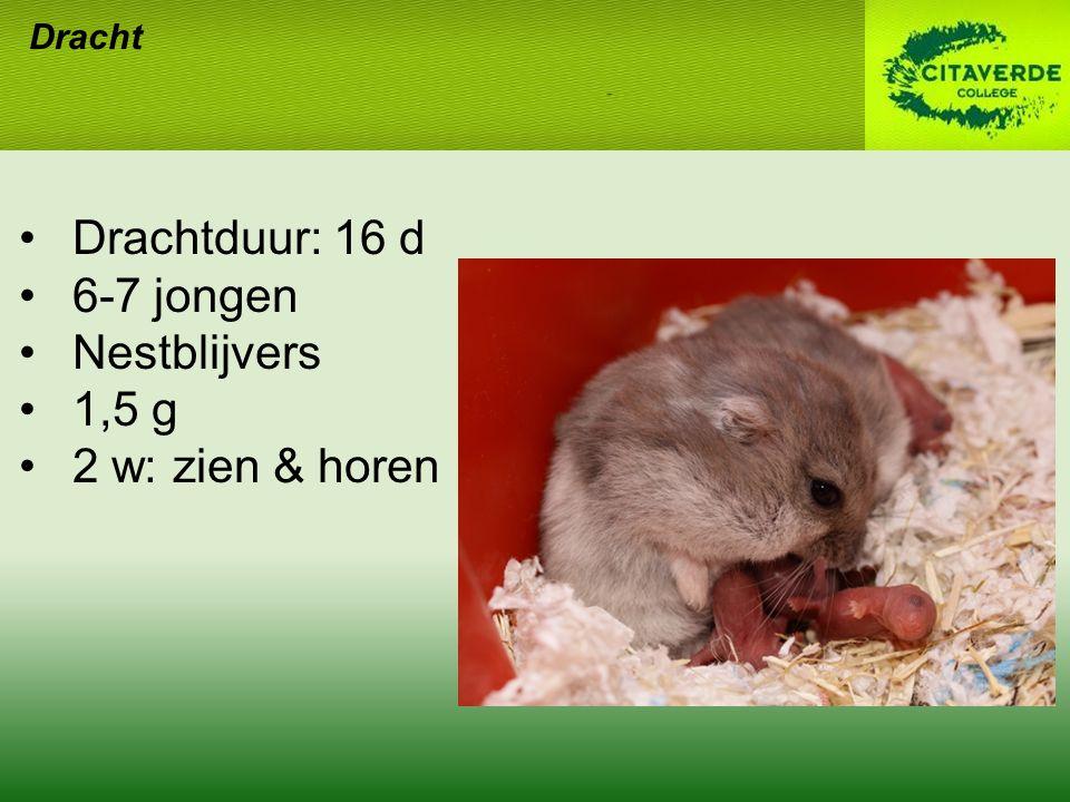 Drachtduur: 16 d 6-7 jongen Nestblijvers 1,5 g 2 w: zien & horen