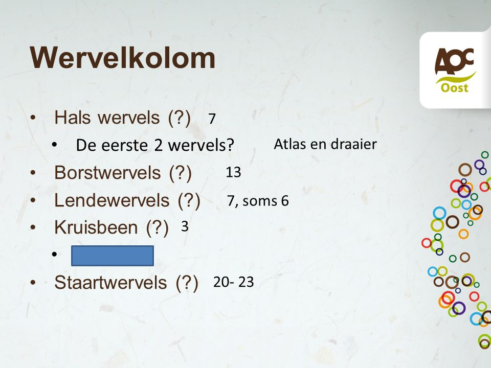 Wervelkolom Hals wervels ( ) De eerste 2 wervels Borstwervels ( )