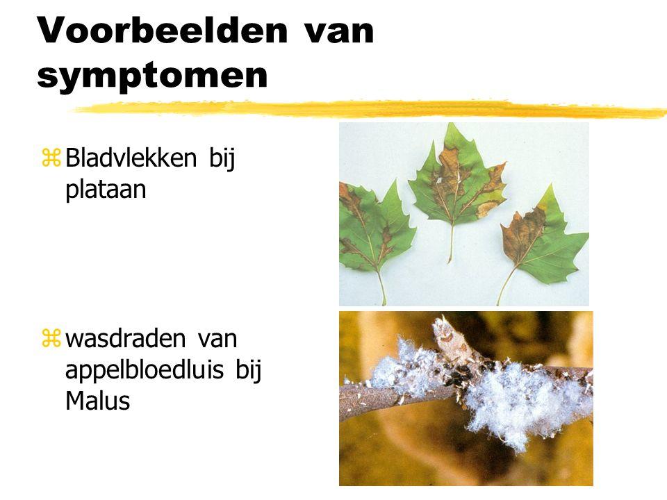 Voorbeelden van symptomen