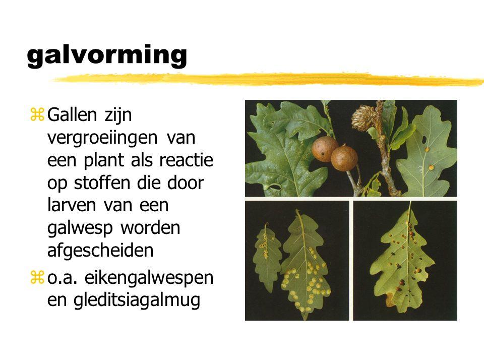 galvorming Gallen zijn vergroeiingen van een plant als reactie op stoffen die door larven van een galwesp worden afgescheiden.