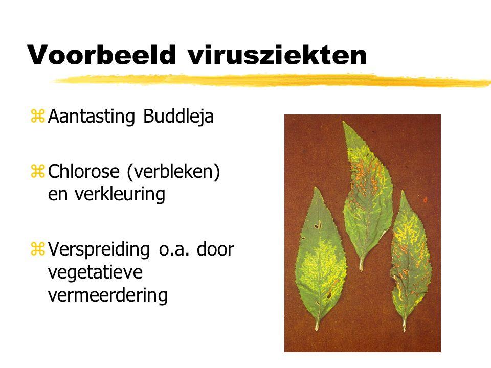 Voorbeeld virusziekten