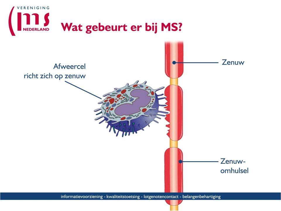 Het immuunsyssteem is bij MS op een of andere manier in de war geraakt en valt niet alleen schadelijke indringers als bacterien en virussen aan, maar ook de eigen, goede cellen.