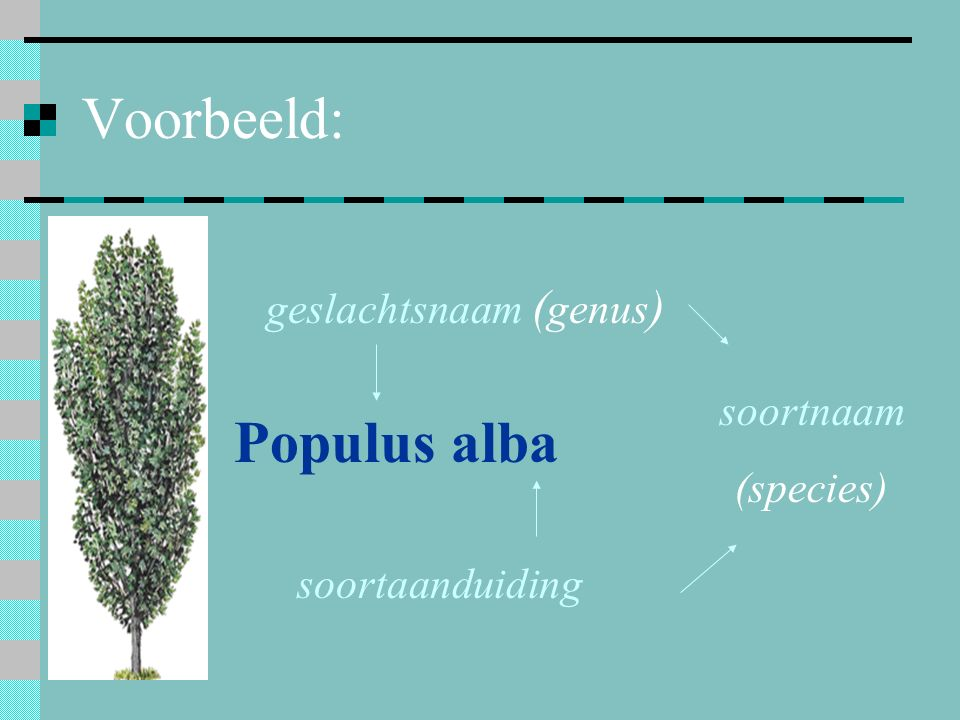 geslachtsnaam (genus)