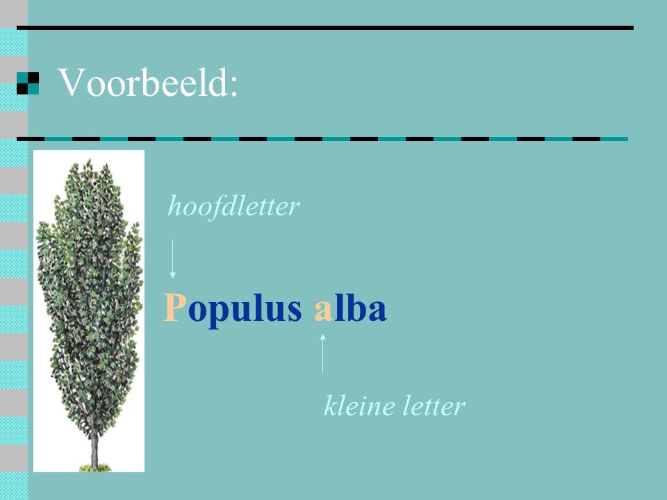 Voorbeeld: hoofdletter kleine letter Populus alba