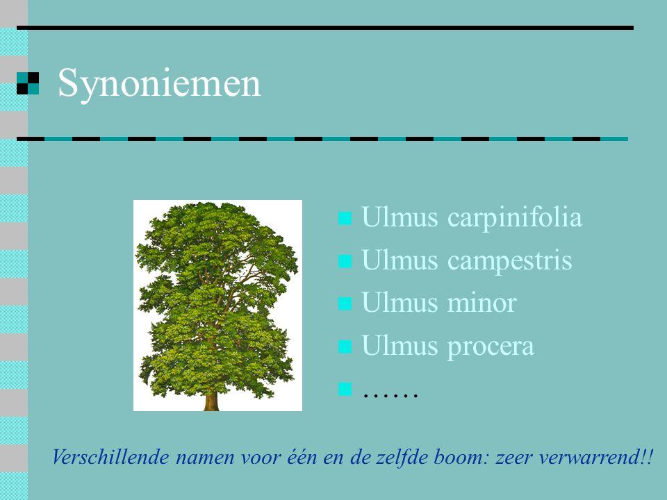 Verschillende namen voor één en de zelfde boom: zeer verwarrend!!