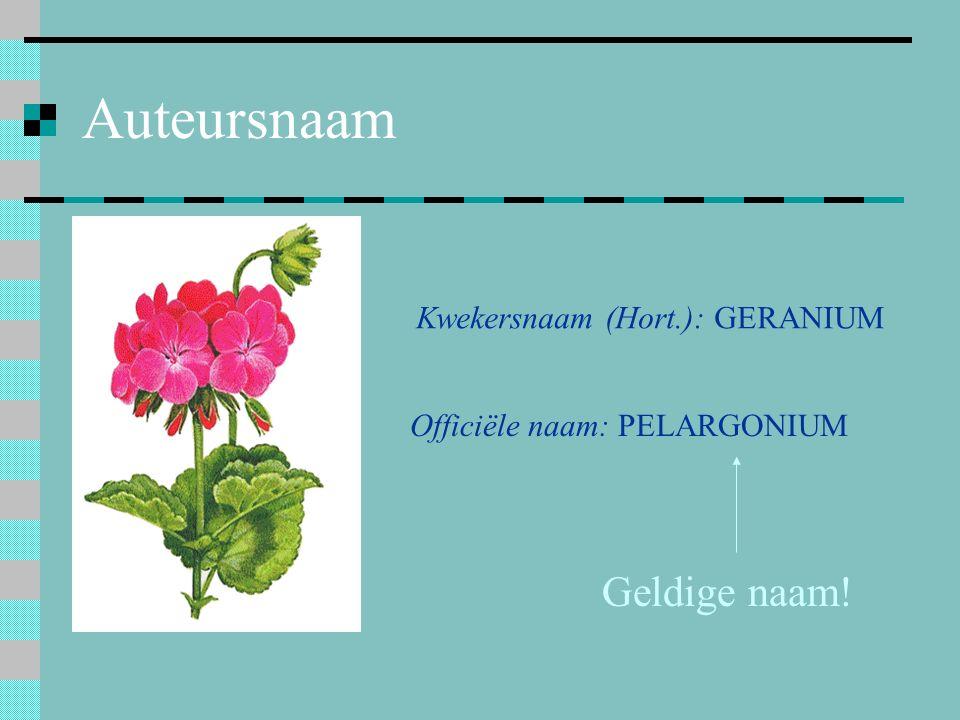 Auteursnaam Geldige naam! Kwekersnaam (Hort.): GERANIUM