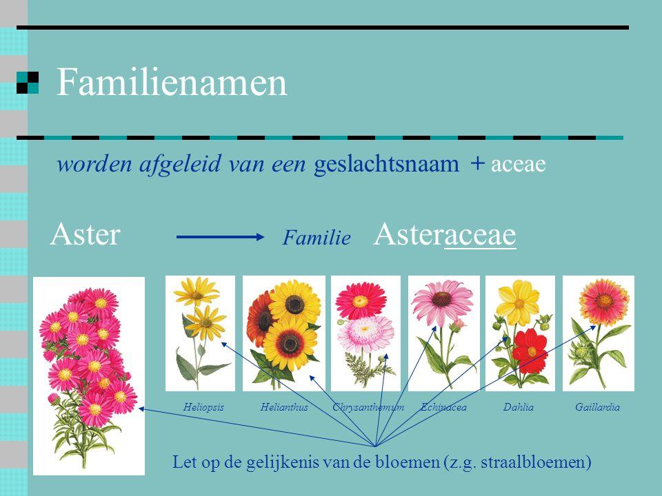 Familienamen Aster worden afgeleid van een geslachtsnaam + aceae