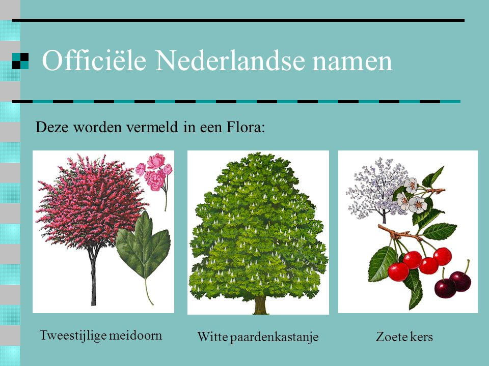 Officiële Nederlandse namen