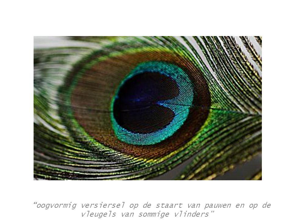oogvormig versiersel op de staart van pauwen en op de vleugels van sommige vlinders
