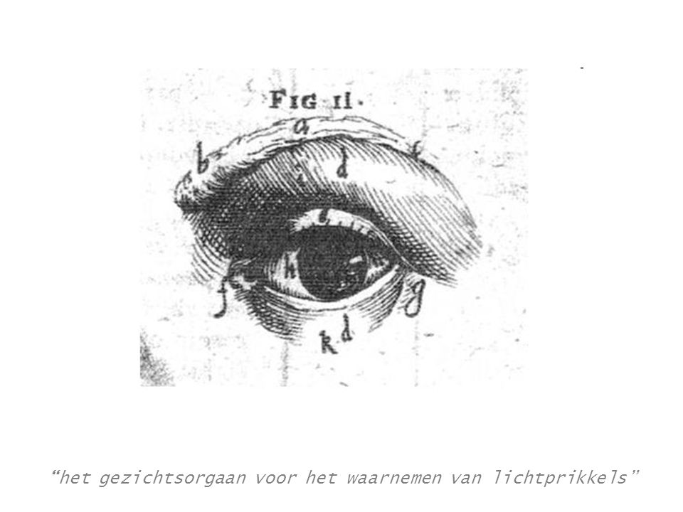 het gezichtsorgaan voor het waarnemen van lichtprikkels