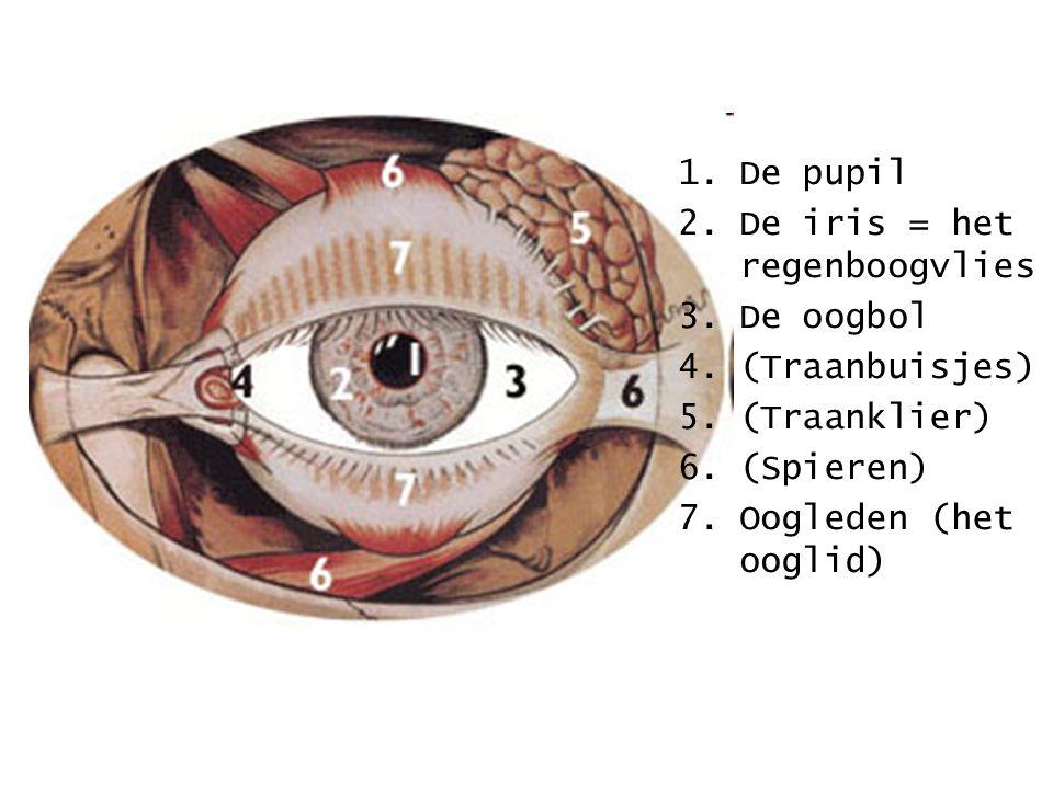 De pupil De iris = het regenboogvlies. De oogbol.