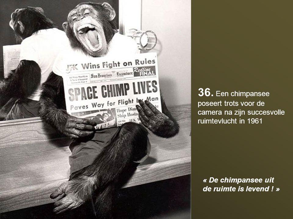 36. Een chimpansee poseert trots voor de camera na zijn succesvolle ruimtevlucht in 1961