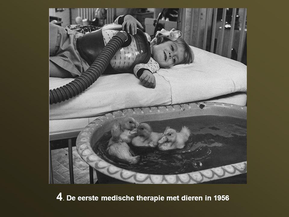4. De eerste medische therapie met dieren in 1956