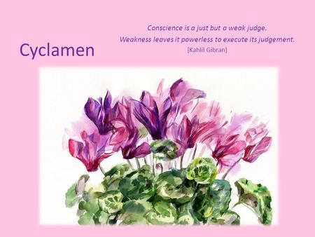 Cyclamen Conscience is a just but a weak judge. Weakness leaves it powerless to execute its judgement. [Kahlil Gibran]