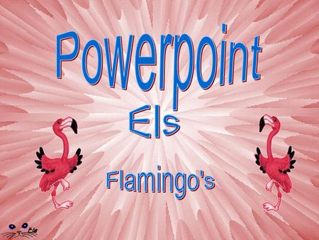 Powerpoint Els Flamingo's.