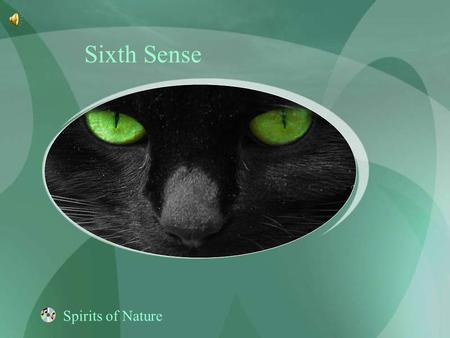 Sixth Sense Spirits of Nature.
