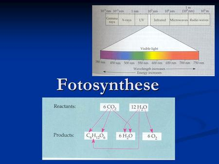 Fotosynthese.