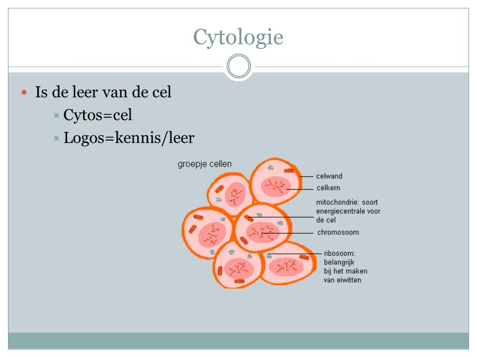 Cytologie Is de leer van de cel Cytos=cel Logos=kennis/leer