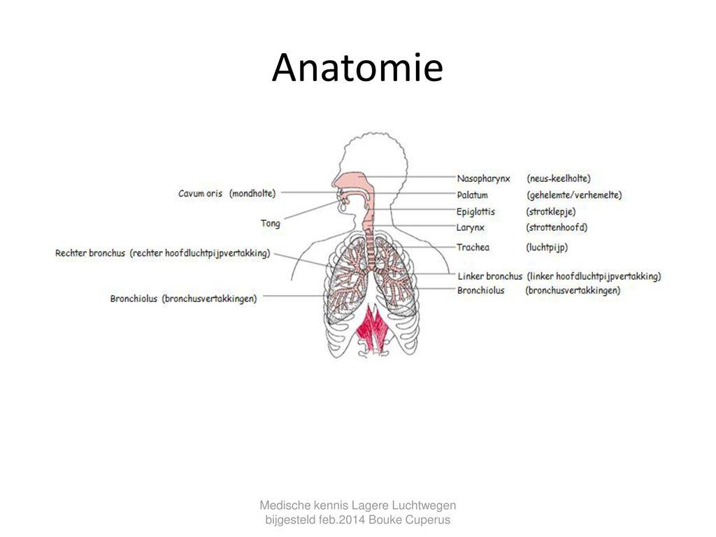 Erfreut Anatomi Der Hölle Galerie - Anatomie Ideen - finotti.info