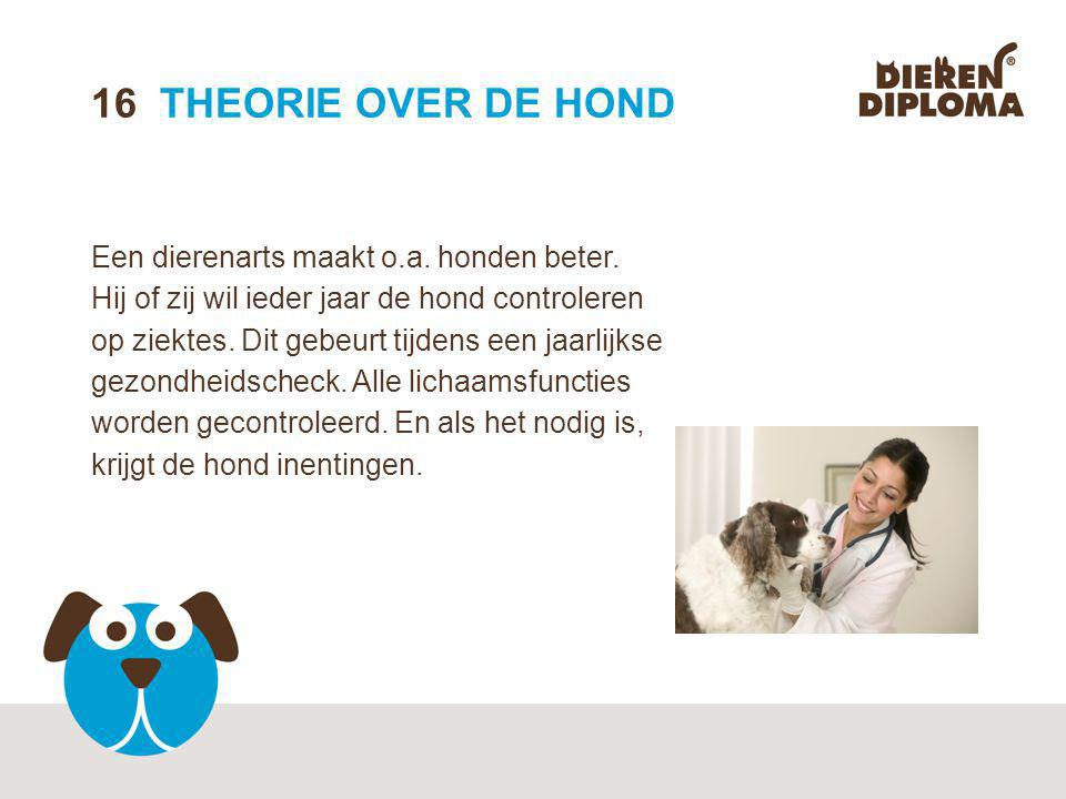16 THEORIE OVER DE HOND