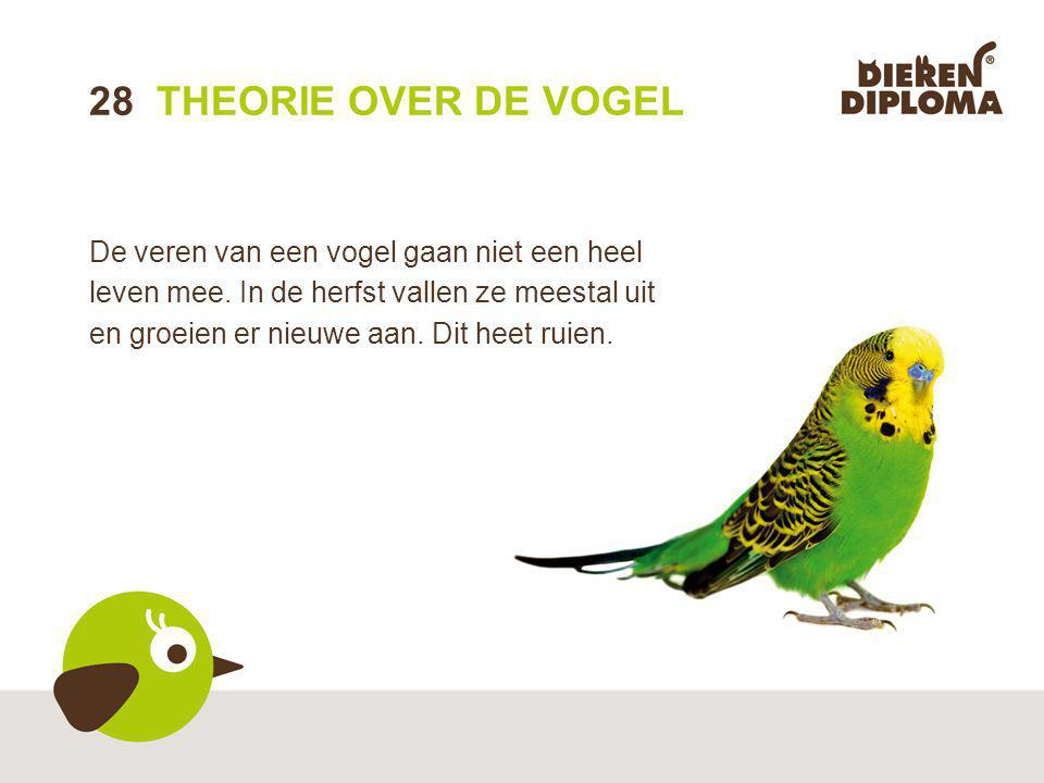 28 THEORIE OVER DE VOGEL