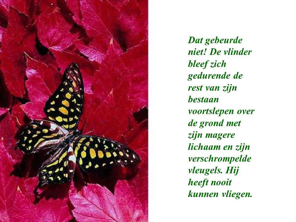 """New De les van de vlinder """"Op een dag ontstond er een klein gaatje in #YQ93"""