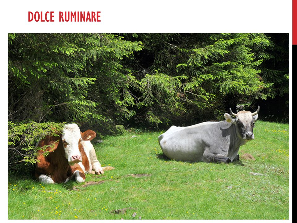 Dolce ruminare