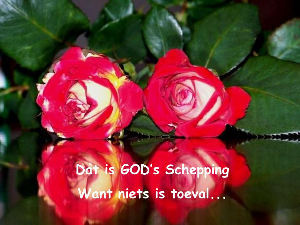 Dat is GOD's Schepping Want niets is toeval...