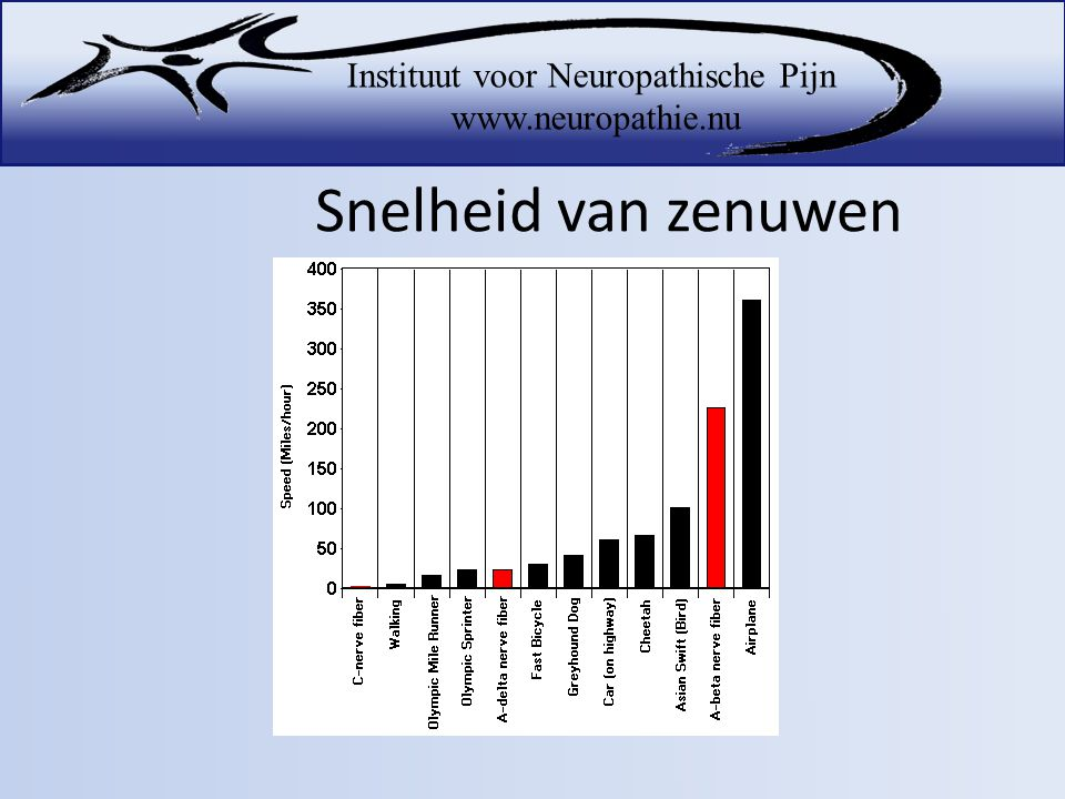 Snelheid van zenuwen A-alpha nerve fibers carry information related to proprioception (muscle sense).