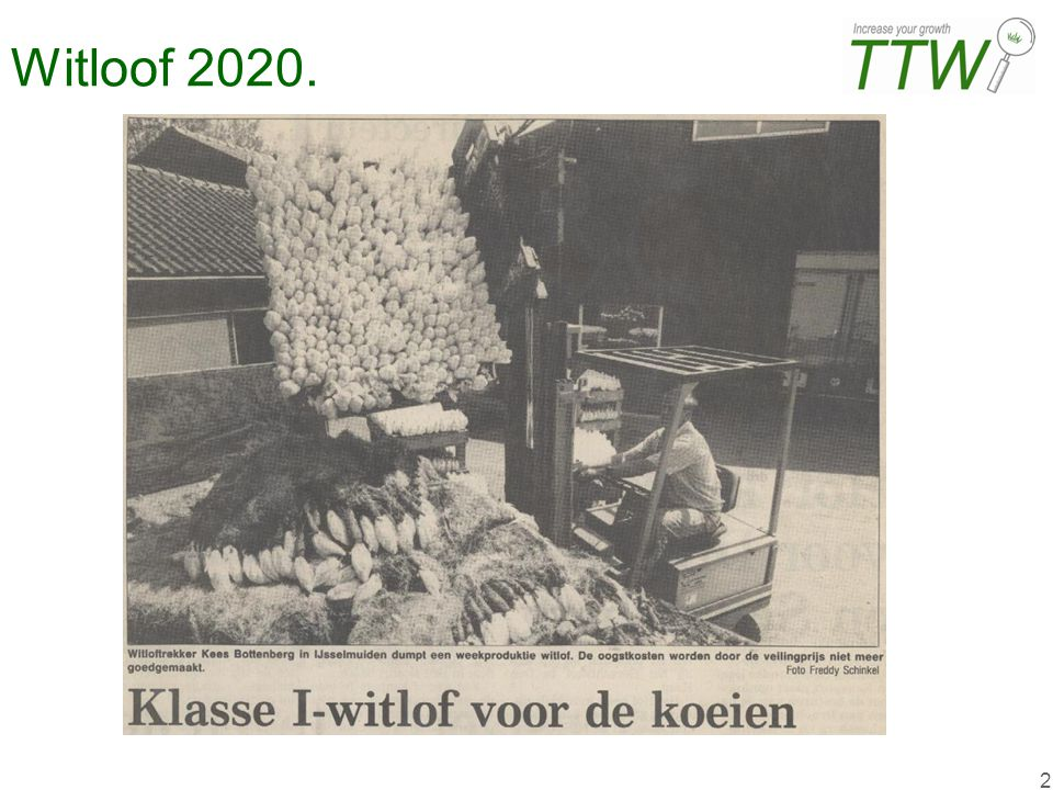Witloof 2020.