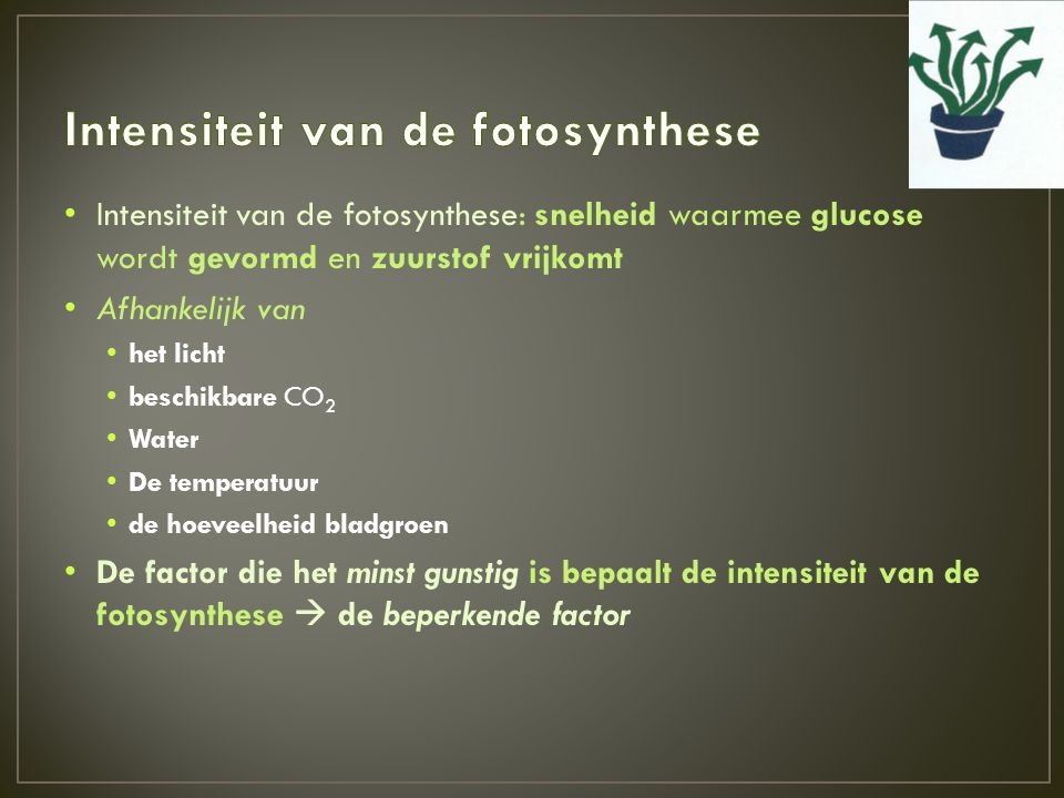 Intensiteit van de fotosynthese
