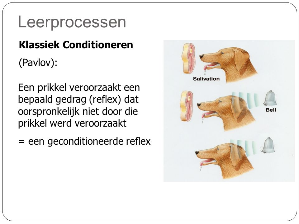 Leerprocessen Klassiek Conditioneren (Pavlov):