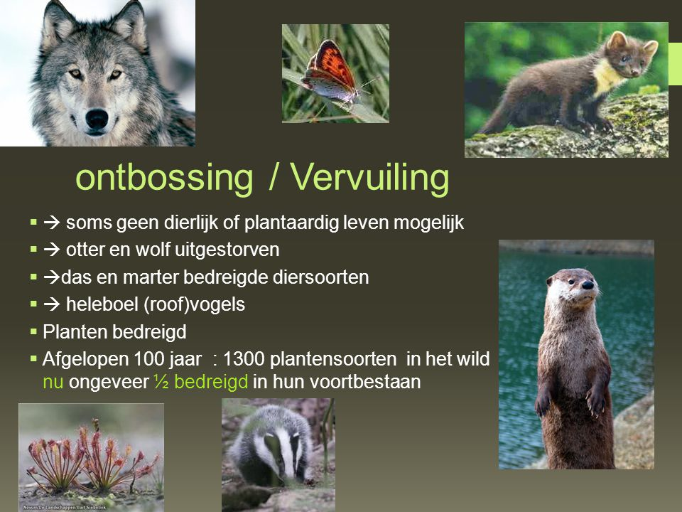 ontbossing / Vervuiling
