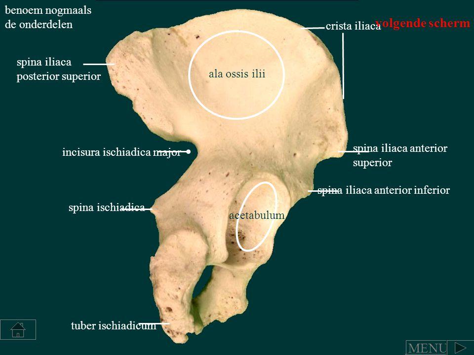 Schön Spina Iliaca Anterior Superior Oberflächenanatomie Fotos ...