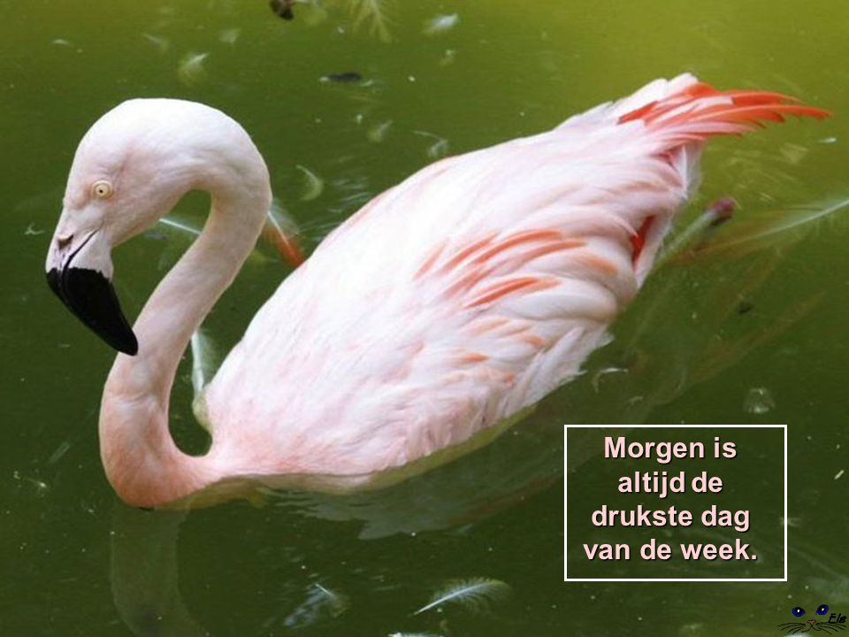 Morgen is altijd de drukste dag van de week.