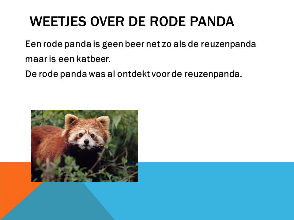 Weetjes over de rode panda