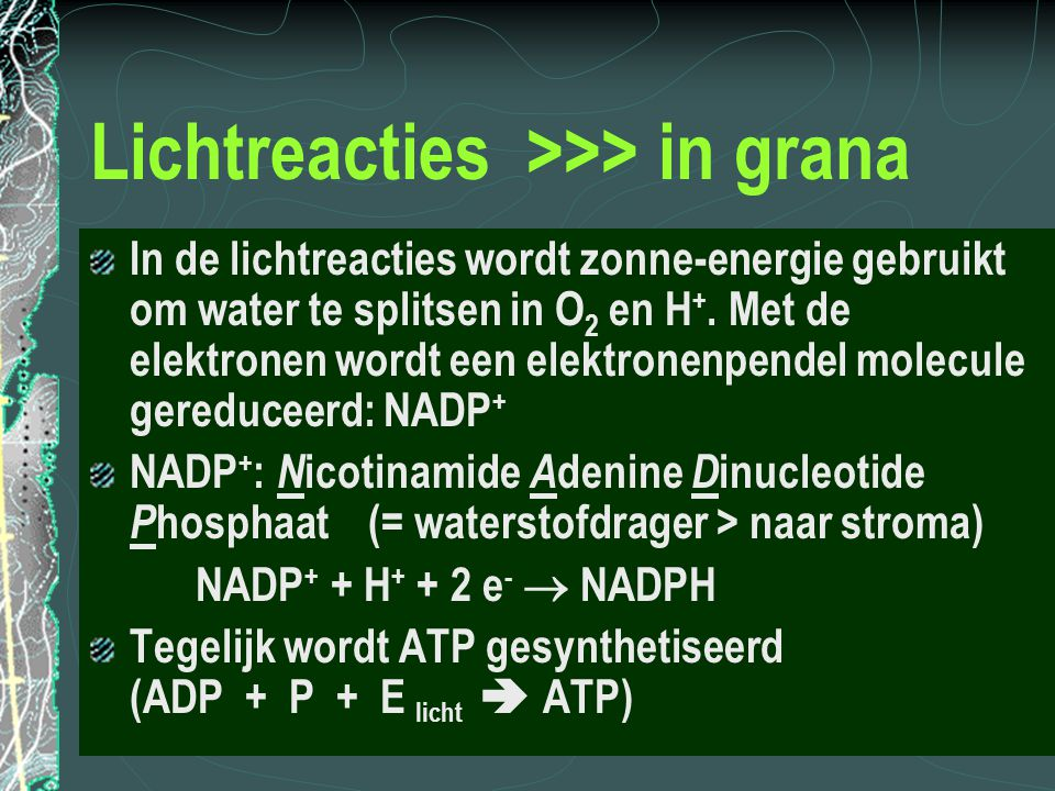 Lichtreacties >>> in grana