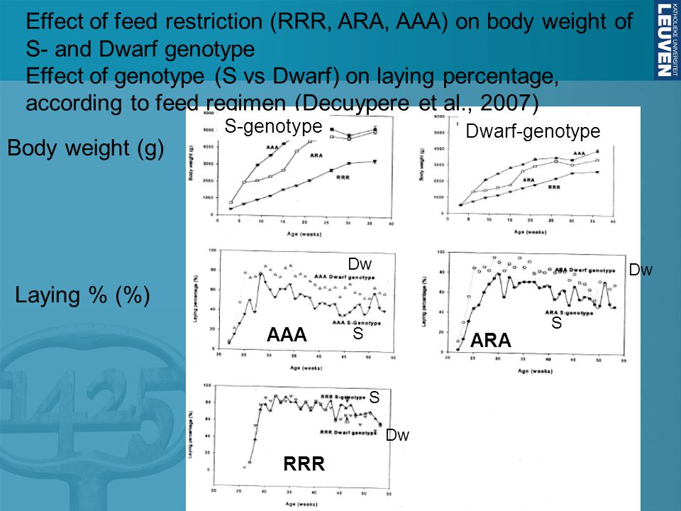 Effect of feed restriction (RRR, ARA, AAA) on body weight of S- and Dwarf genotype