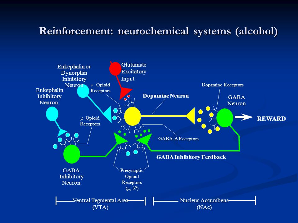 Reinforcement: neurochemical systems (alcohol)