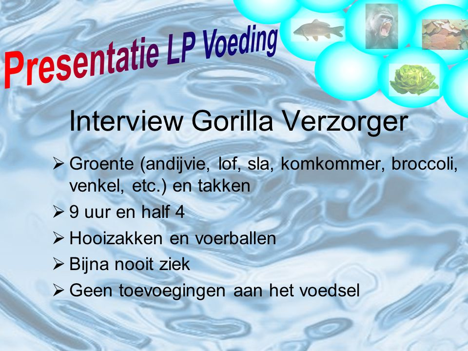 Interview Gorilla Verzorger