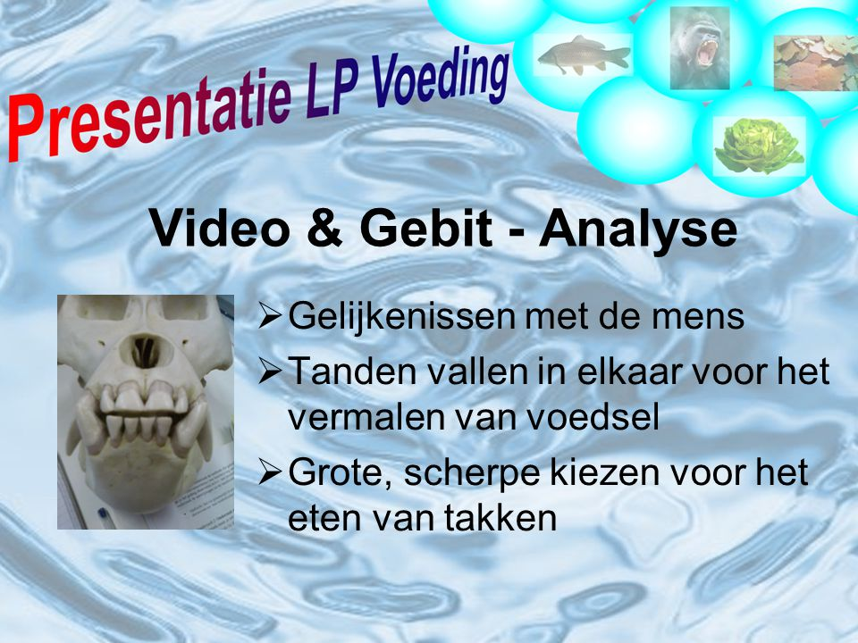 Video & Gebit - Analyse Gelijkenissen met de mens