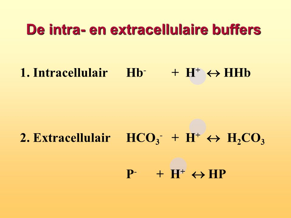 De intra- en extracellulaire buffers