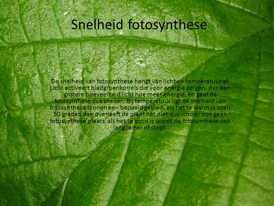 Snelheid fotosynthese